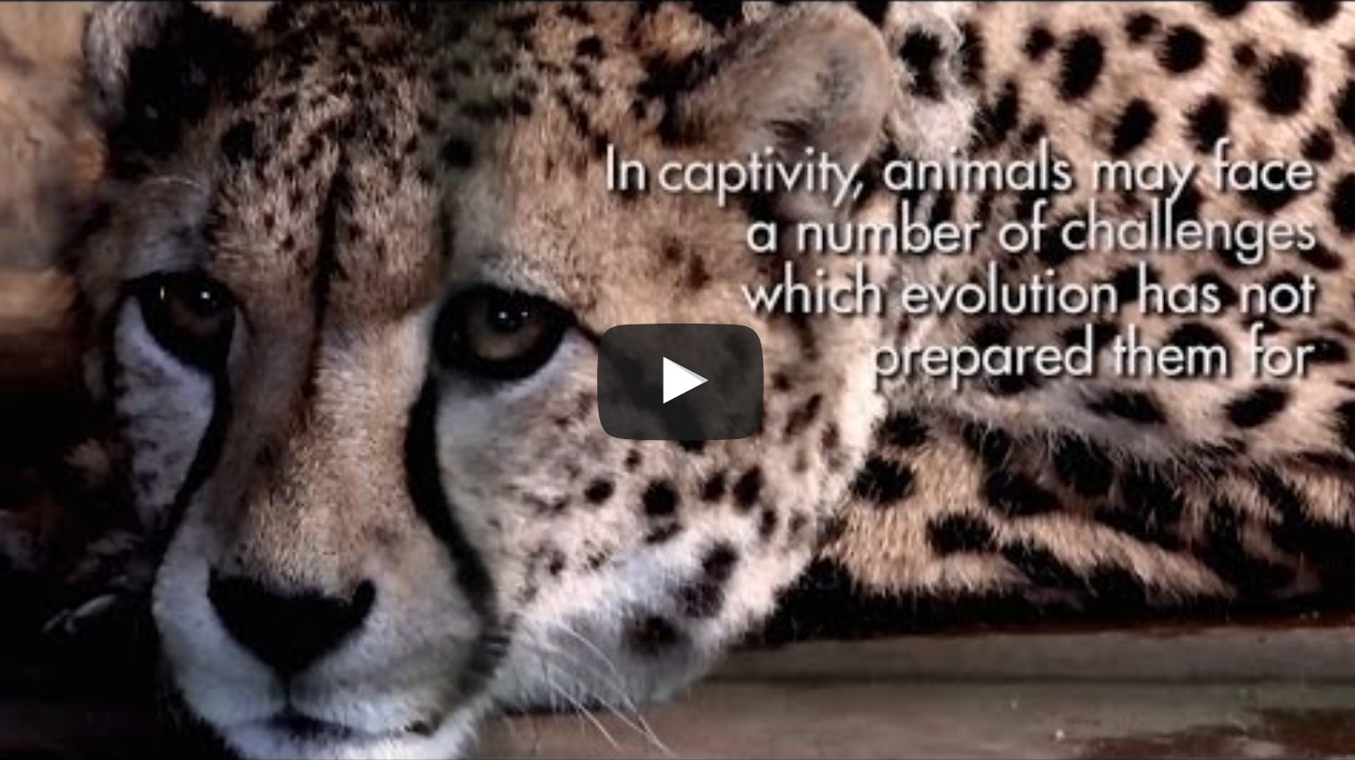 Zoochosis - The living conditions of animals in captivity | VeganFlix