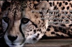 Zoochosis - The living conditions of animals in captivity